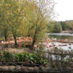 мусульманская община г.о. Красногорск организовала для детей экскурсию в зоопарк